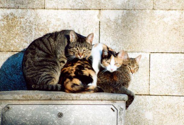 Em Portugal a prática de comer gato não é comum.(Foto: Morguefile.com,  por Danielito)