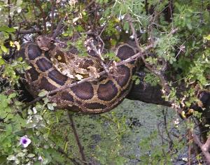 As cobras têm vindo a ser mais nesta região. (Fonte:http://animalgalleries.org)