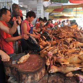 Maioria quer proibir festival de carne de cão naChina