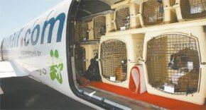 Animais de estimação podem viajar com novasmedidas